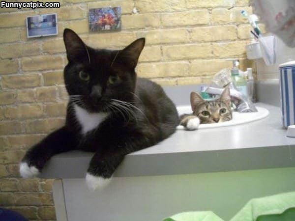 Sink Kitties