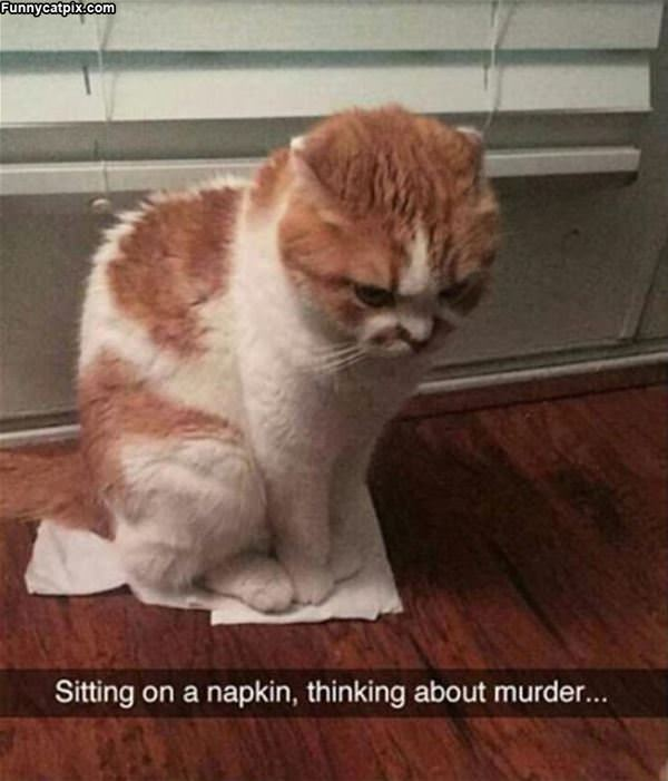 Sitting On A Napkin
