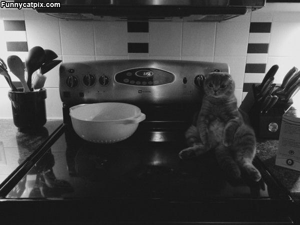 Sitting On The Stove