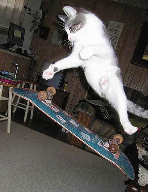 Skateboarding Kittah