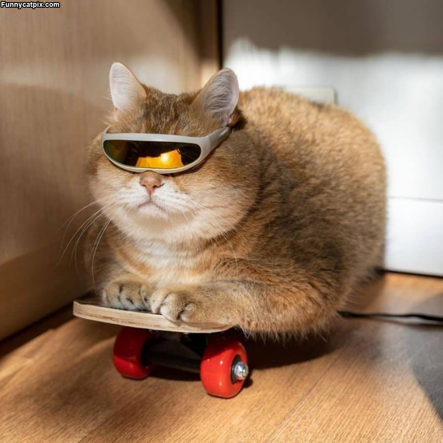 Skater Cat Is Cool