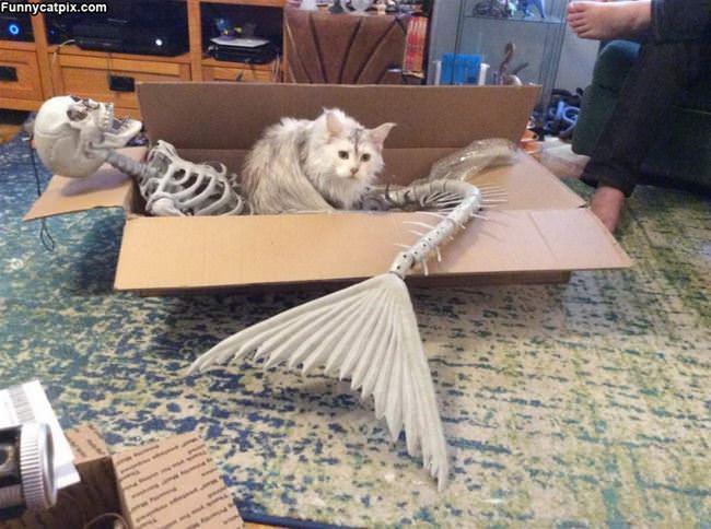 Skelaton Box