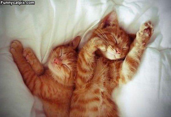 Sleep Together