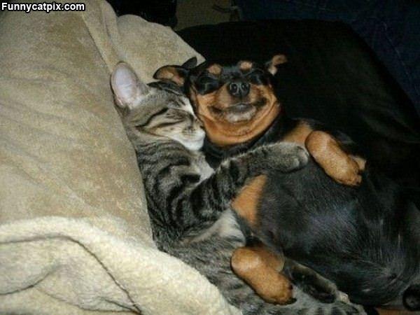 Sleep With My Buddy