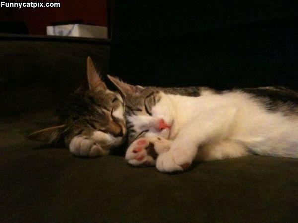 Sleeper Cats