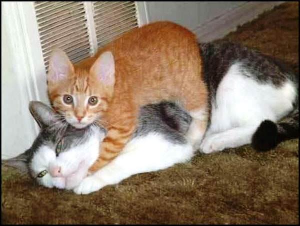 Sleeper Hold Cat