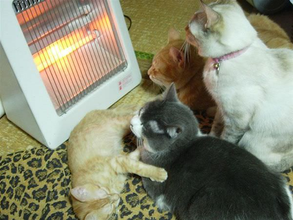 Sleeping By The Heater