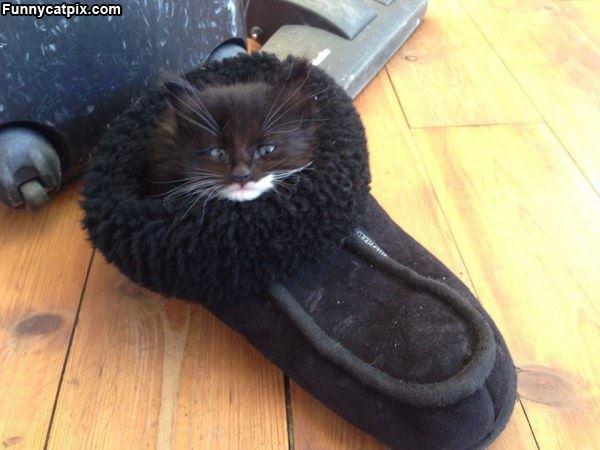 Sleeping In A Shoe