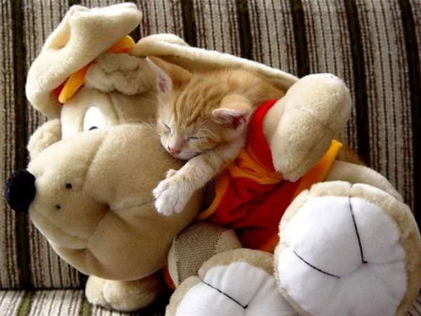 Sleeping With A Bear