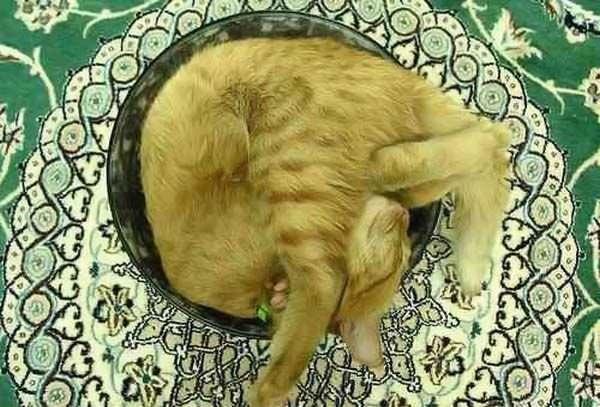 Sleeps However