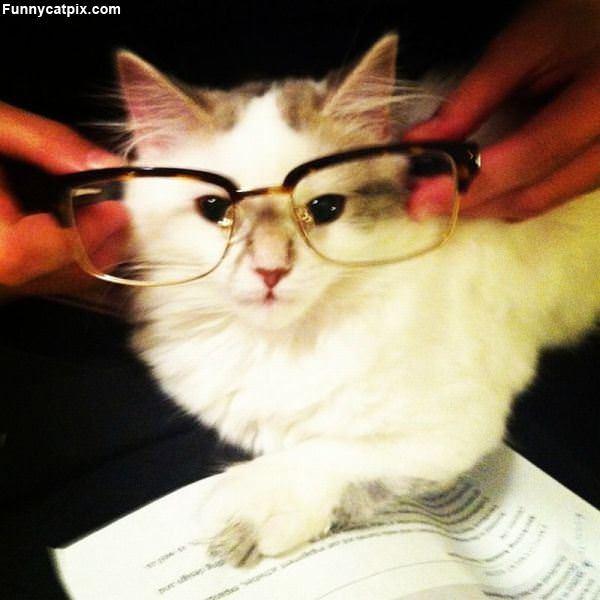 配眼镜读书 - 雪山 - .