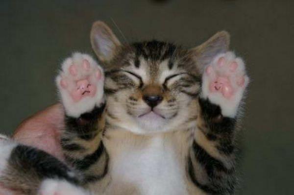 Smiley Paws