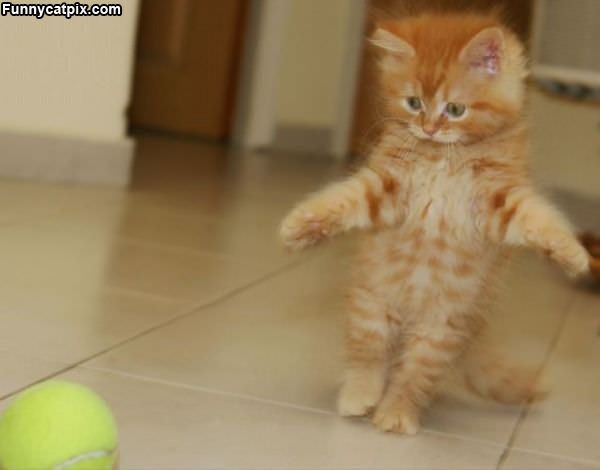 Sneaking Up On The Ball