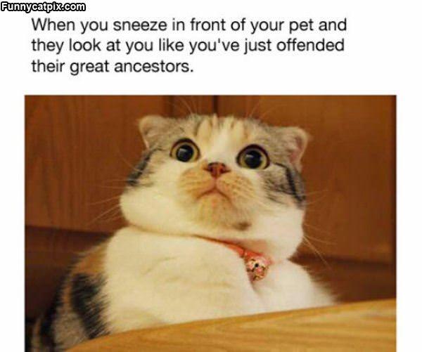 Sneeze Pet Expression