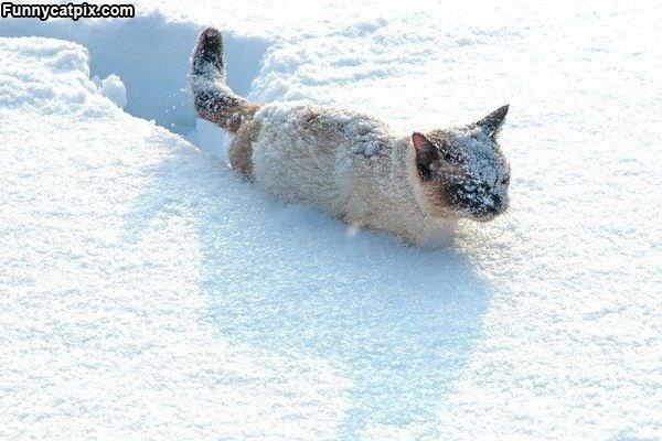 Snow Cat
