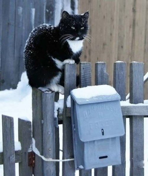 Snowy Post