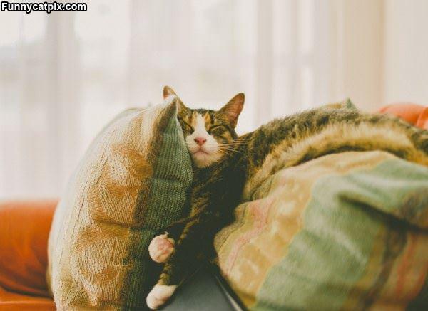 So Comfortable