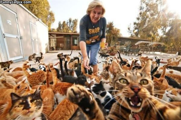 So Many Cats