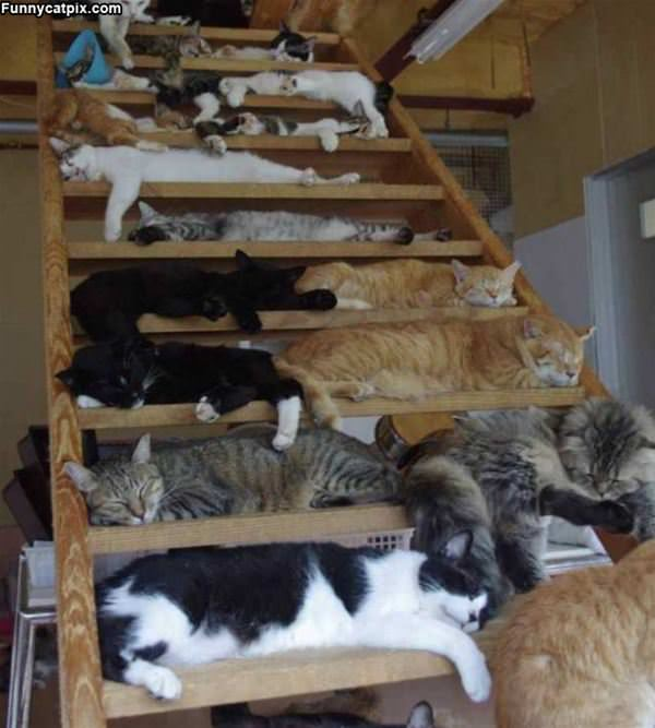 So Many Kitties
