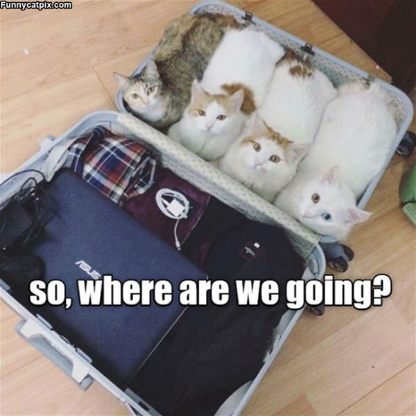 So Where Are We Going