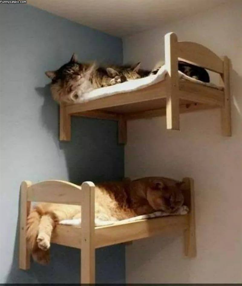 Some Bunk Beds