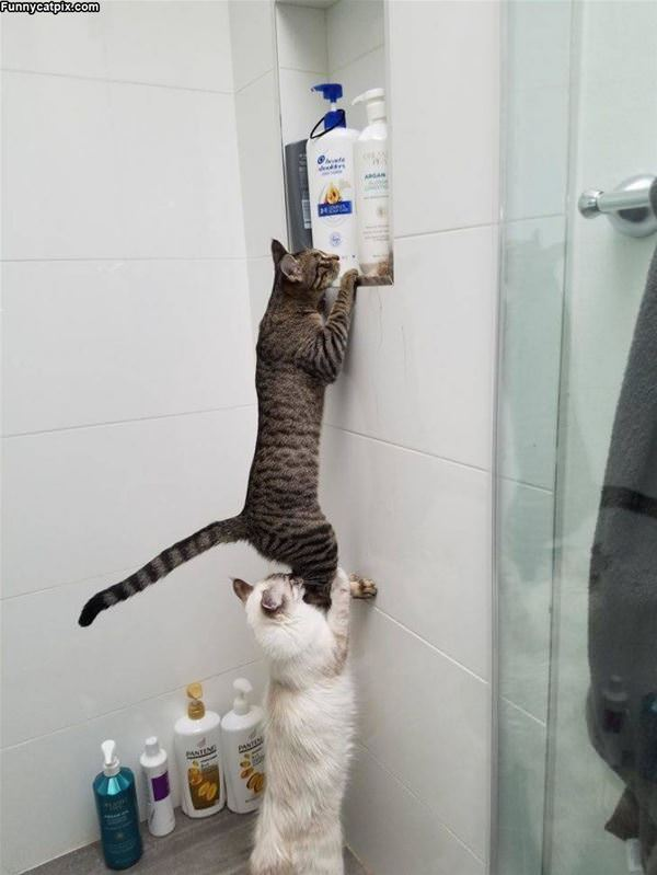 Some Help Getting Up