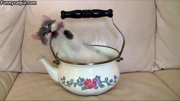 Spot Of Tea Cat