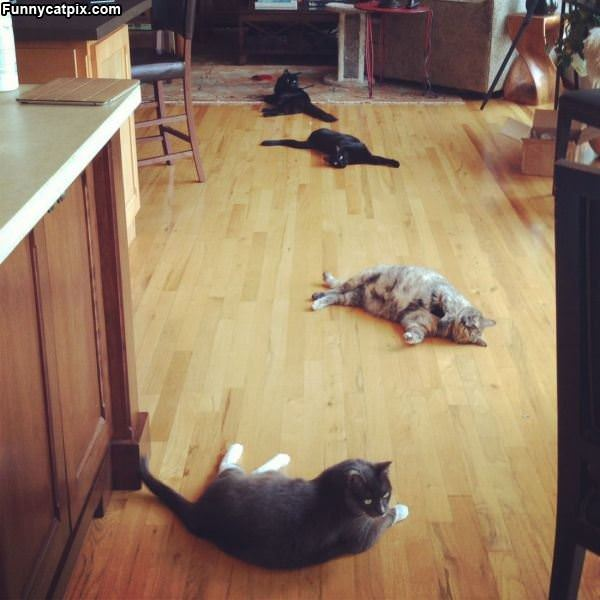 Spread Out The Cats