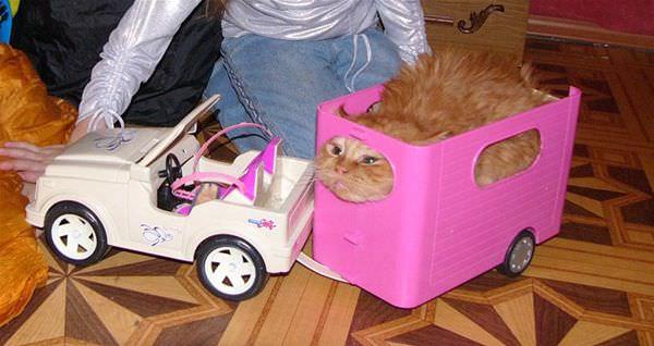 Squooshed Cat