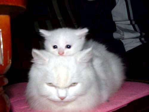 Stack Cats
