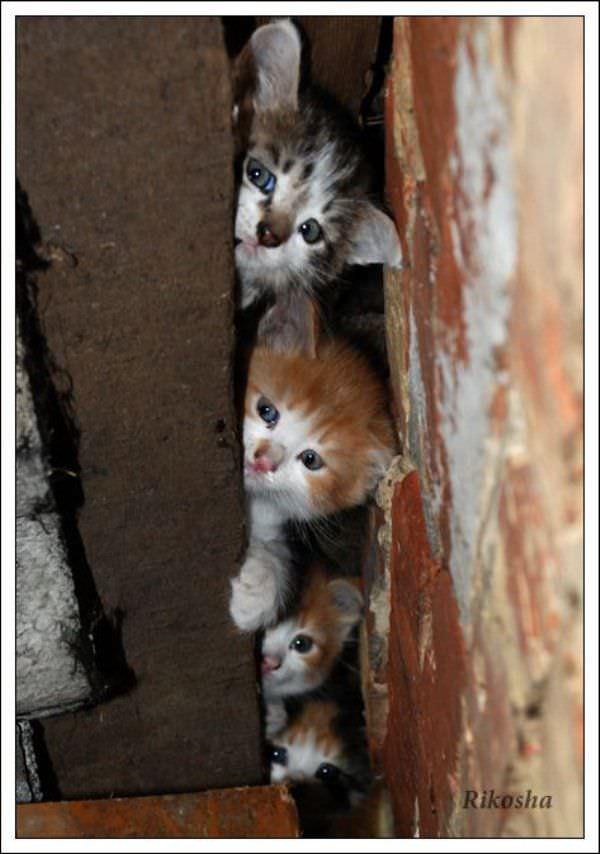Stack Of Kittens