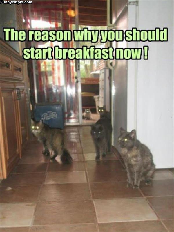 Start Breakfast Now