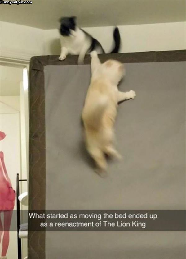 Started By Moving The Bed