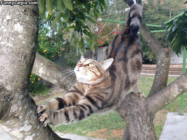 Stretching In A Tree