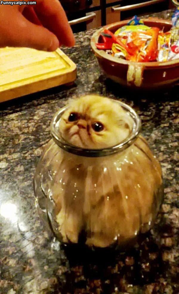 Stuck In A Jar