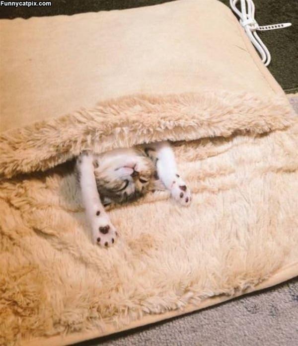 Super Cuddled In