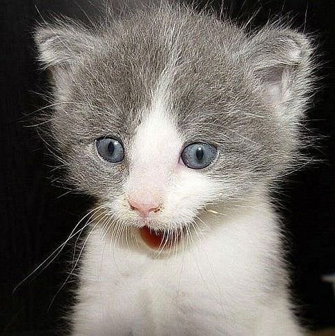 Super Happy Kitten