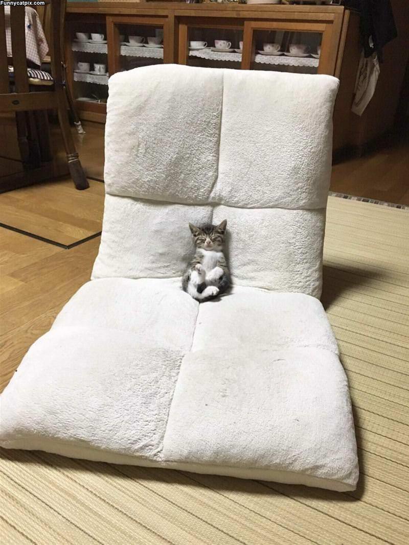 Super Relaxed Kitten