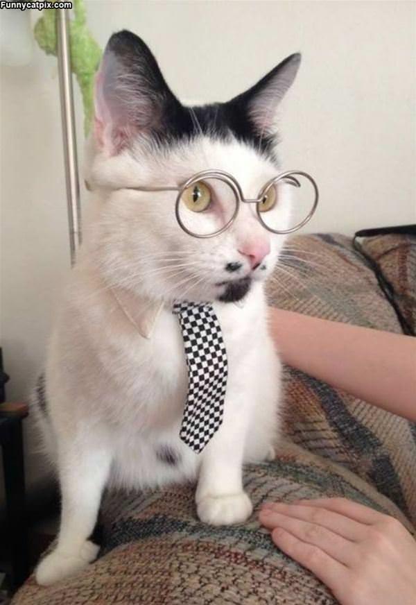 Super Smart Cat