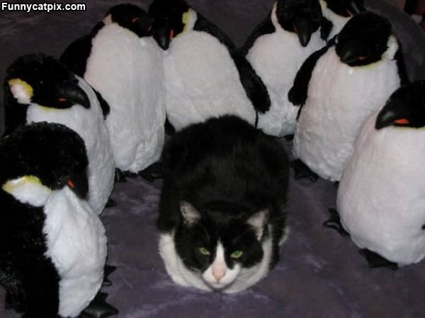 Surrounded By Penguins