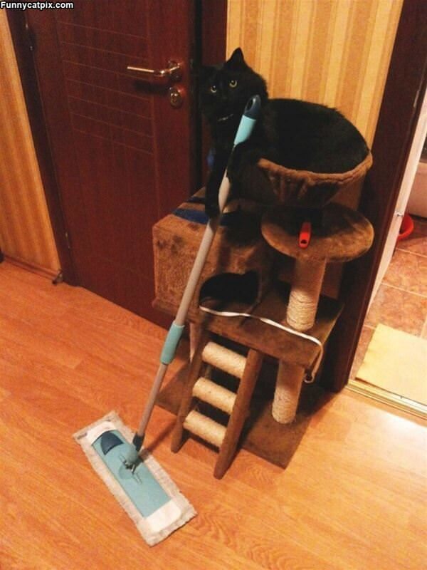 Sweep Sweep