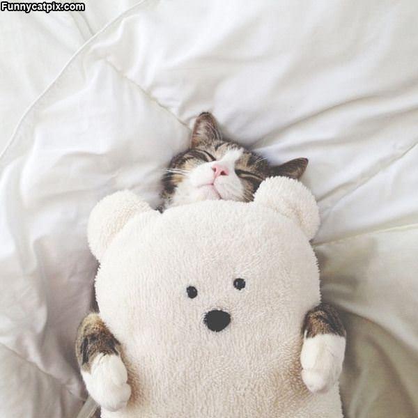 Sweet Bear Dreams