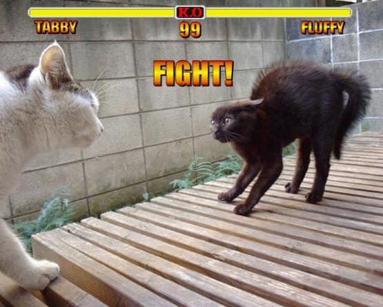 Tabby Vs Fluffy