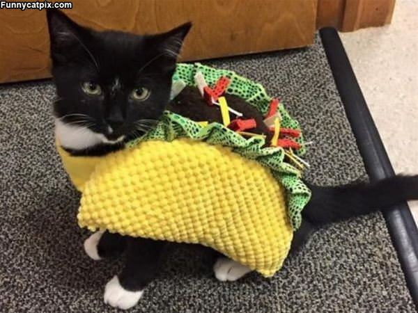 Taco Cat Backwards Is Taco Cat