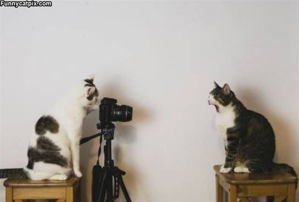 Take The Picture Already
