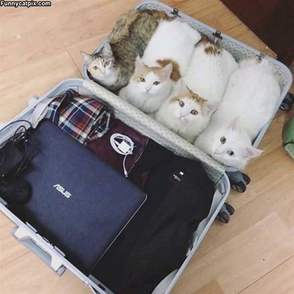 Take Us With You Please