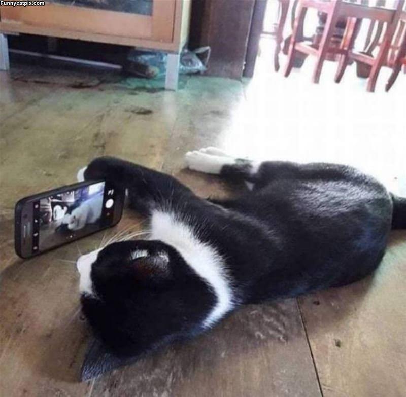 Takign Selfies