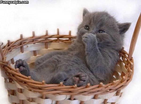 Taking A Basket Nap