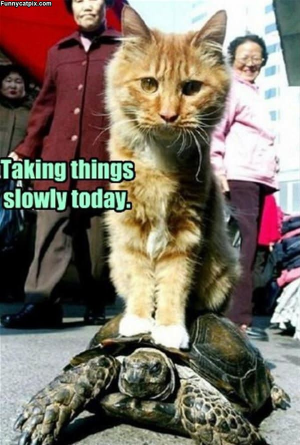 Taking Things Slowly