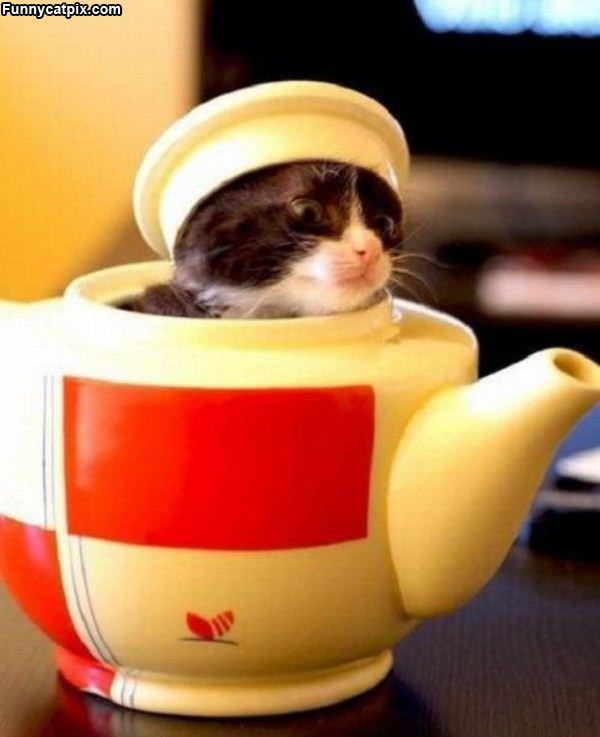 Tea Pot Cat